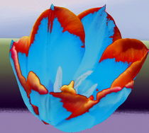 Tulpe von Karlheinz Milde