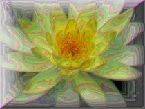 gelbe Blüte von Karlheinz Milde