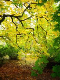 'Curtain of yellow and green leaves.' by Ro Mokka