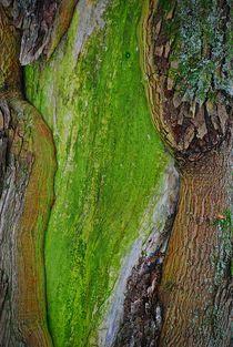 tree art... 6 von loewenherz-artwork