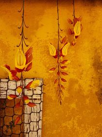 Indian clock vine on golden yellow background  by Ro Mokka
