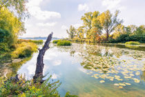Reeds and Water Lilies in the River by maxal-tamor