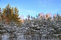 Winter. Forest. Pine shoots von mnwind