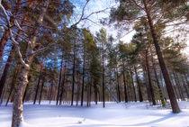 Winter. Forest. Light von mnwind