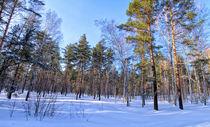 Winter. Forest. Shadow von mnwind