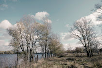 Autumn Trees  Close to the Dnieper River by maxal-tamor