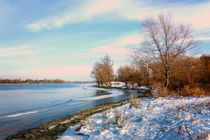 Winter Trees  Close to the Dnieper River by maxal-tamor