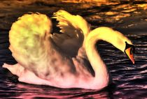 Swan in the Evening by kattobello