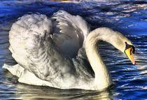 Swan in the Sun light by kattobello