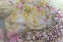 Weiße Rosen / 3 von Heidi Bollich