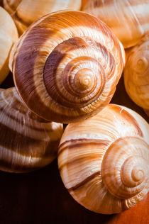 Snail Shells by maxal-tamor