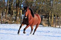 Winterpferd by Dorothee Rund