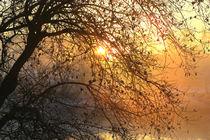 Baum an der Ruhrbrücke von Bernhard Kaiser