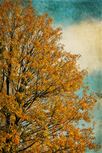 Autumn tree von AD DESIGN Photo + PhotoArt