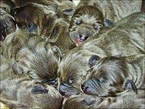 """"""" Puppies Sleeping Well """" von Sandra Vollmann"""