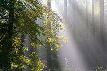 Herbstwald 5 von Bernhard Kaiser