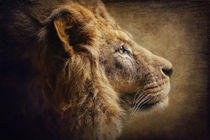 The Lion Portrait von AD DESIGN Photo + PhotoArt