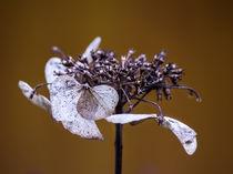 welke Blüte by fotolos