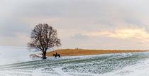 'Winterlicher Ausritt' by Thomas Matzl