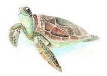 Schildkröte by Nadine Conrad