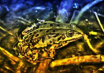 Fantasy Frog von kattobello