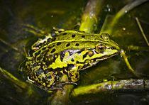 Grüner Frosch  von kattobello