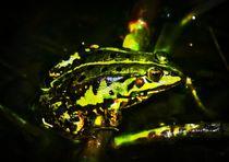 Mid Night Frog by kattobello