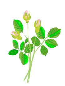 Three Rose Buds by maxal-tamor
