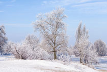 Trees covered by frost, ice and snow close to the Dnieper River by maxal-tamor