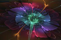 Enchanted by Svetlana Nikolova