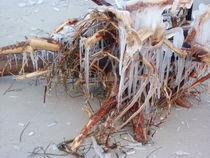 Strandfund von rola