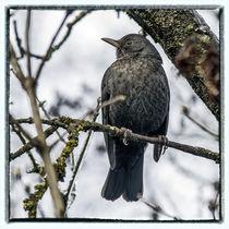 Bird in the Ice - blackbird by Chris Berger