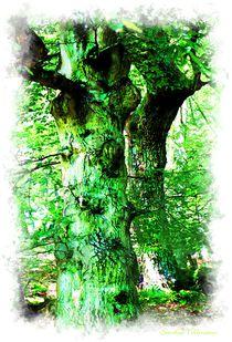 ~~ Knorrige Bäume ~~ Natur Art by Sandra Vollmann