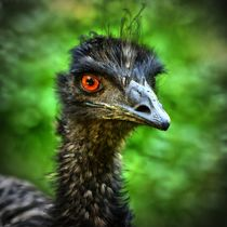 Emu Portrait 4 by kattobello