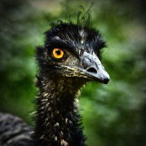 Hell Bird 6 von kattobello