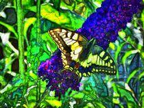 Farbenfroher Schwalbenschanz auf Flieder 3 by kattobello