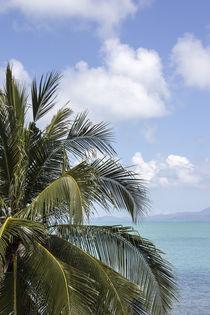 palmtree, sea, island von anando arnold