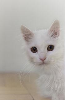 Kleine Katze / 21 von Heidi Bollich