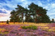 Lüneburger Heide in voller Blüte von moqui