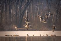 Flying Geese von jazzlight