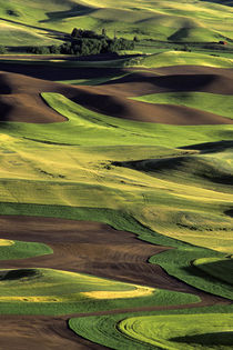 Rolling Hills in the Palouse von Jim Corwin