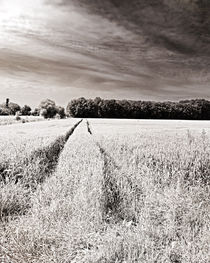 Tracks in the field by Michael Naegele
