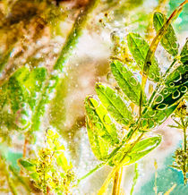 Plants in Water by maxal-tamor