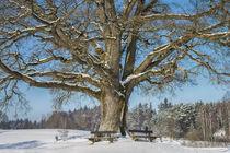 Tree 903017 by Mario Fichtner