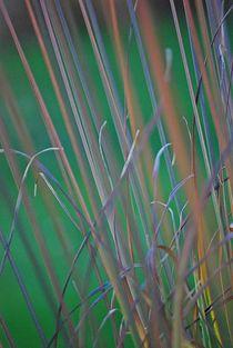 die Kunst der Gräser... von loewenherz-artwork