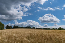 Eine leichte Brise treibt die Wolken über das Kornfeld by Ronald Nickel