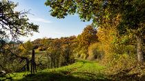 Grüner Feldweg im Herbst by Ronald Nickel