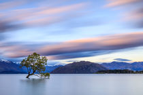 Lonely Tree by Christine Berkhoff