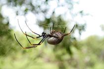 spider by Daniel Schröcker