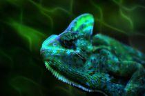 Jemenchamäleon Unterwasser von kattobello